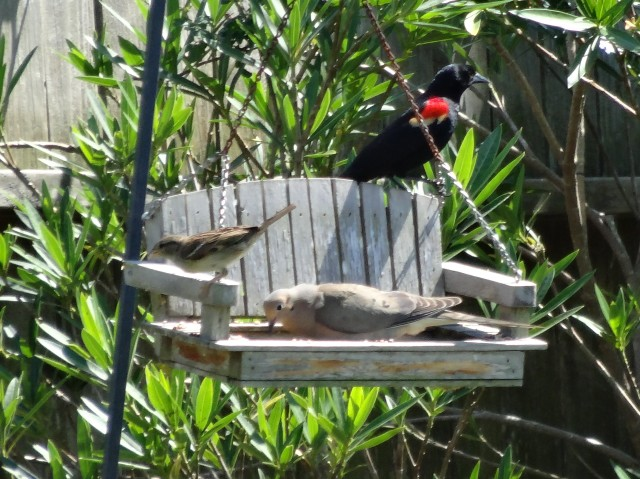 Birds in Birdfeeder (2)